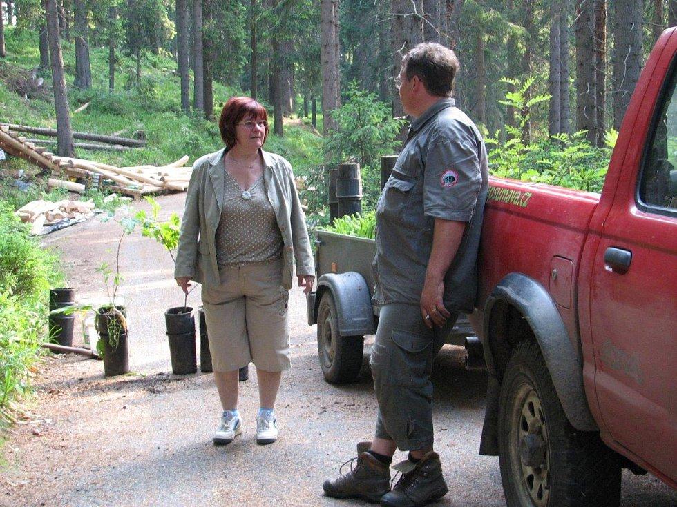 Tvrzení prezidenta Miloše Zemana o sázení stromků na Šumavě v území, kde jsou zásahy nepřípustné, dokládá i starosta Kvildy, který si činnost Správy parku osobně zdokumentoval.