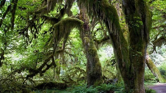 Dnešní Národní park Olympic, Tichý oceán a deštné pralesy.