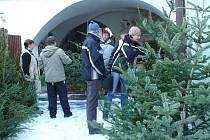 I když Městské lesy Prachatice nabídnou do prodeje šest stovek stromků, padesátka už jich zmizela rukama zlodějů přímo z lesa.