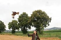 Vypuštění uzdraveného motáka pochopa ze stanice pro handicapovaná zvířata Správy NP Šumava v Klášterci do volné přírody u Strunkovic nad Blanicí.