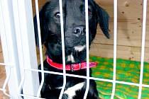 V Netolicích psi v kotci žádní nejsou, v Prachaticích jich je naopak třináct.