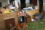 Psa Bořka jeho majitelé zachránili na poslední chvíli