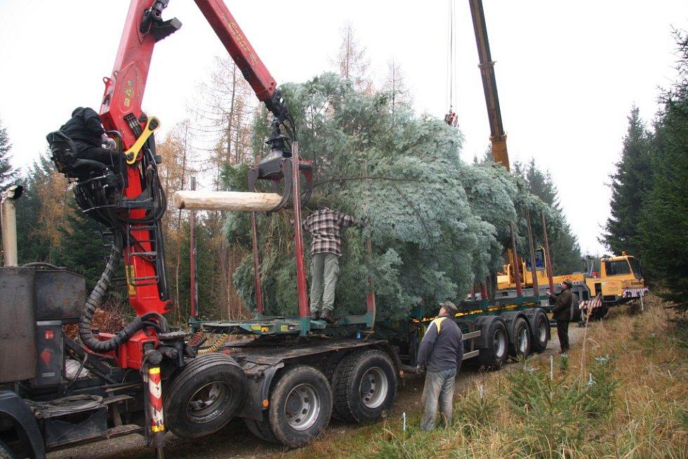 Začíná nejkritičtější okamžik, vánoční strom se nakládá.