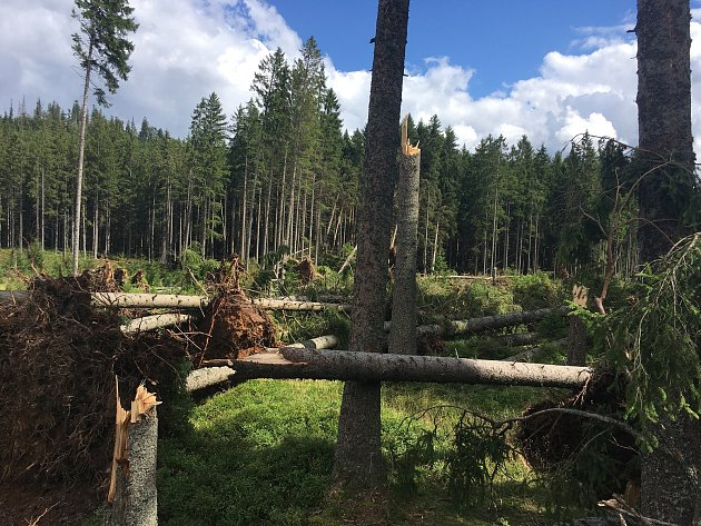 Páteční bouřka za sebou nechala obrovské škody na území Národního parku Šumava. Turisté se tak na některá místa nepodívají.