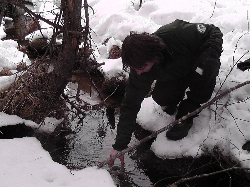 Biolog Správy NP Šumava Jan Mokrý, který odebírá vzorek vody do laboratorní lahve z potoku Hučina u Mrtvého luhu nedaleko Stožce.