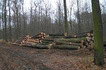 Kácení v lese u Němčic.