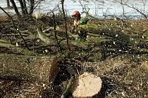 Nejčastějším zaměstnáním cizinců je v prachatickém regionu pěstební či těžařská činnost v lesnictví.