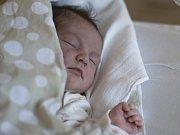 Třetí holčičku mají Dita a Andrew ze Středokluk. Ruby Ylona Davis se narodila v prachatické porodnici v úterý 8. 8. ve 2.30 hod. a vážila 3700 gr. Na holčičku se těší sestřičky Nina (5,5) a Eva (3,5) a prarodiče Ylona a František Štěrbovi z Prachatic.
