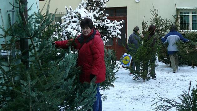 Prodej vánočních stromků jede naplno.