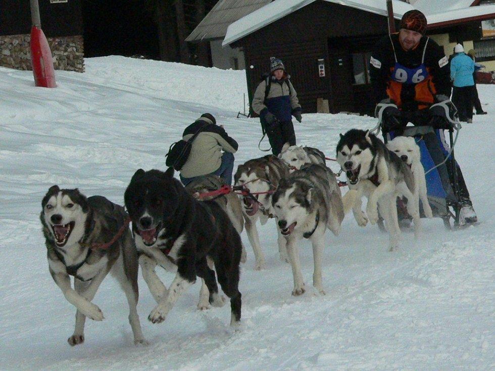 Víkend na Churáňově patřil musherům, v neděli se navíc i běžela Stašská 15.