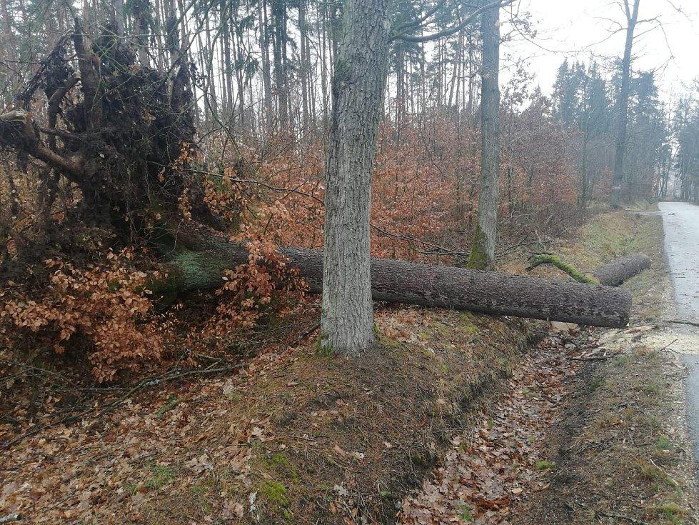 Popadané stromy na Netolicku. Foto: Jakub Bouda