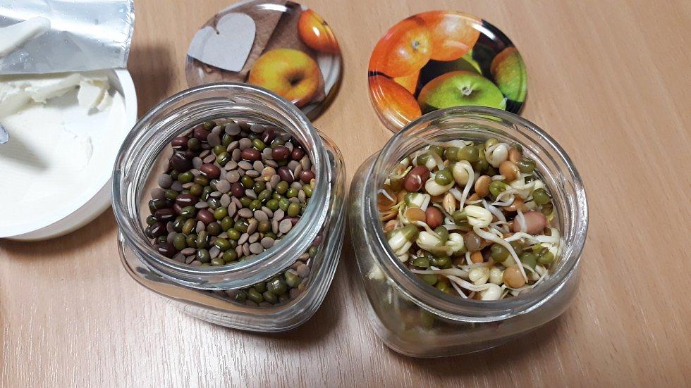 Klíčení semínek.