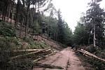 Městské lesy musejí kácet stromy v okolí tankovky. Jsou napadené kůrovcem.