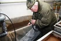Během tření musí Josef Šperl pravidelně odebírat jikru mníka z nádrže, kde se ryba tře. Nejjednodušší způsob je nasát jikru hadicí do kbelíku a odtud pak do speciálních Zugských lahví, kde se z oplodněné jikry vykulí plůdek.