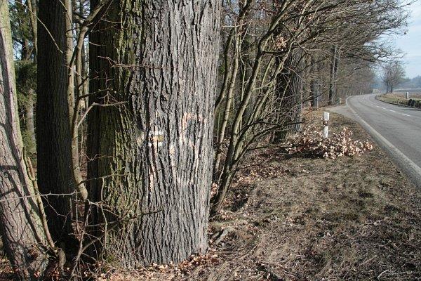 Další stromy by se měly pokácet pod Oborou směrem zNetolic na Prachatice.