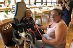 Cvičení psi bavili seniory.