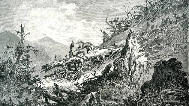 Vichry a kůrovcem zpustošená stráň na Šumavě.