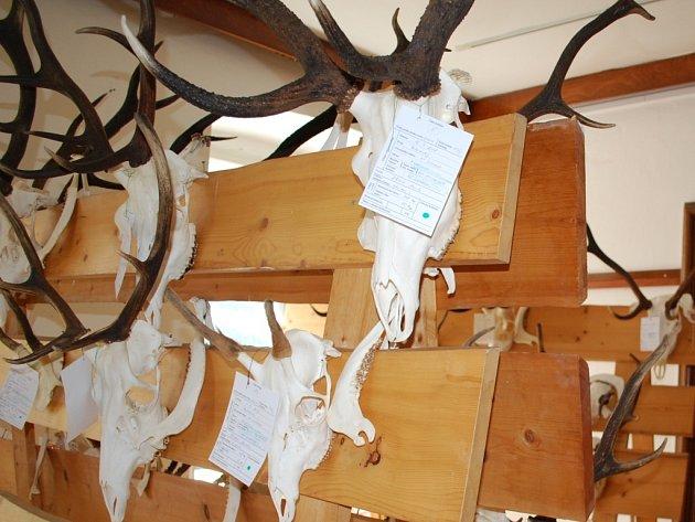 Výstava trofejí zvěře z Národního parku Šumava