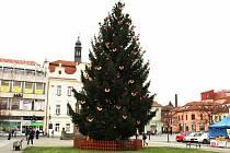 Vánoční strom v Berouně