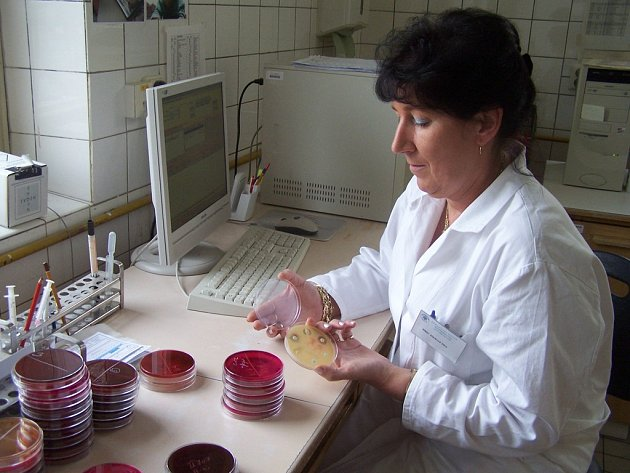 Mikrobiologie v Hořovicích
