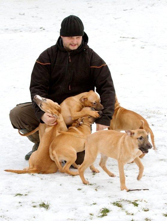 Čtyři pejsci a jedna fena čekají ve Bzové na zkušené majitele, kteří je zahrnou péčí a láskou.