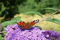 Krásy tuzemské fauny a flóry.