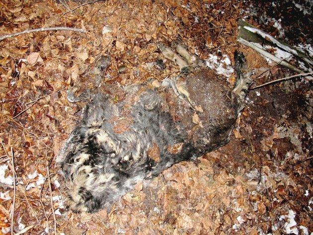 Policie našla pět bezhlavých těl psů