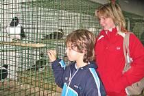 Na chovatelské výstavě si návštěvníci budou moci prohlédnout 600 kusů drobného zvířectva