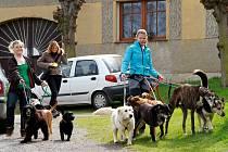 Pohodový výlet se psy se užijete v sobotu 24. září ve Bzové