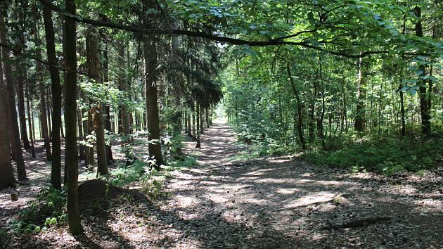 Lesopark Dražovka na okraji Hořovic se zřejmě dočká úprav, vzniknout by tady měly lavičky či herní prvky pro děti.