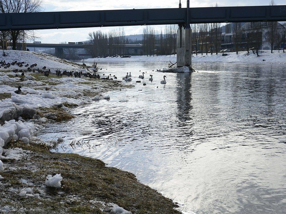 Řeka Berounka při tání sněhu v Berouně.