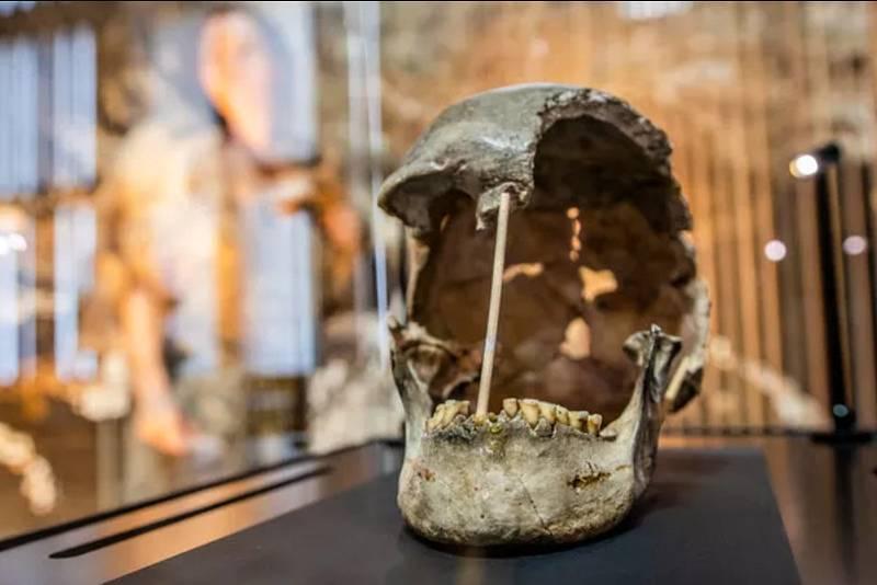Lebka ženy z pravěku. Její fosilie byly nalezeny nedaleko Koněprus na Berounsku.