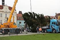 Vánoční strom na berounském Husově náměstí už stojí.