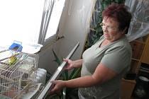 Marie Kouglová z Králova Dvora je přesvědčena, že výrobce  zhotovil  plastová okna větší, než bylo třeba. Firma ale pochybení odmítá. Důchodkyni tak náhradu ztráty nikdo neposkytne.