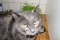 Nalezená kočička našla v Trubské dočasný domov.