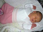 VE ČTVRTEK 7. prosince 2017 se v hořovické porodnici U Sluneční brány narodila Tereza, dcera manželů Rychlých. Holčička přišla na svět s pěknou váhou 4,05 kg a mírou 52 cm. Terezku budou dětským světem provázet bráškové Josífek (6) a Honzík (3).