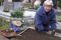 Za věnce a dušičkovou výzdobu zaplatí lidé pěknou sumu peněz. Ta pak končí na hřbitovech, kde už několik dnů panuje  velmi čilý ruch. Dušiček lidé využívají i k důkladnému úklidu hrobů