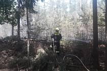 Požár lesa ve Lhotce u Lochovic 12. června 2019.