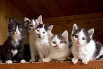 Koťátka čekají na nové majitele v Ekocentru Zvířecí pohoda ve Bzové