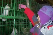 Výstava drobného zvířectva Suchomasty