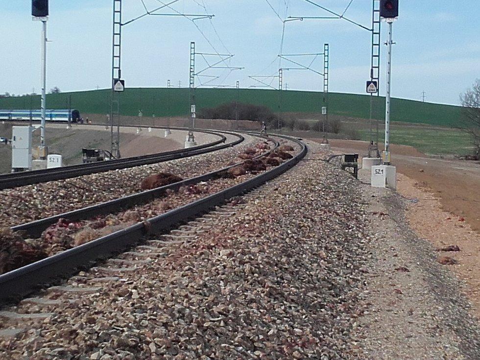 Mrtvé ovce ležely roztroušené po dlouhém úseku trati.