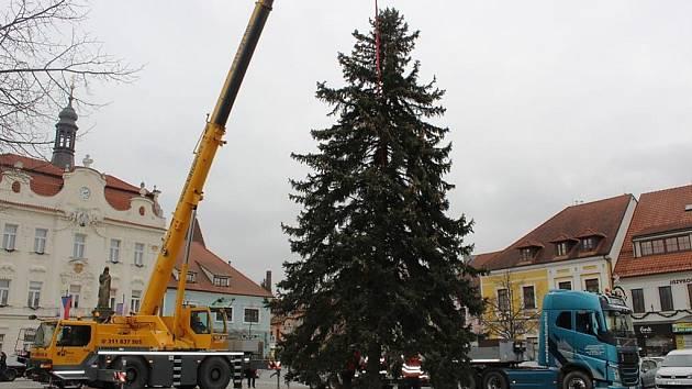 Instalace vánočního stromu na Husově náměstí v Berouně.