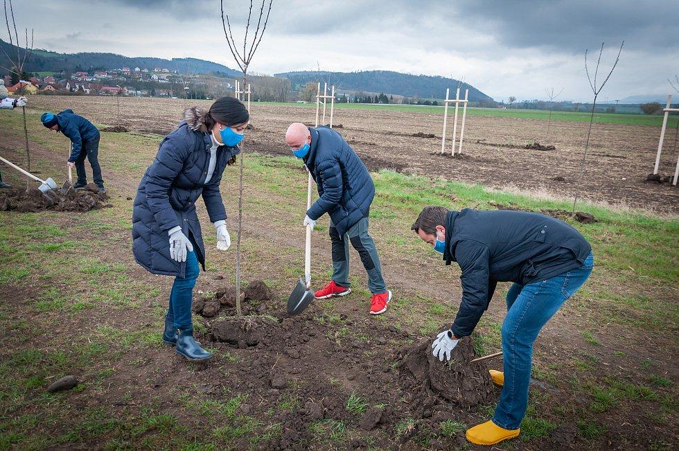 Sázení šedesáti nových ovocných stromků v Levandulovém údolí u Chodouně.
