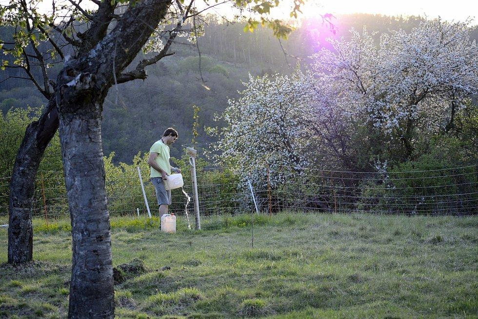 Člen spolku Adam Voldán zalévá mladé ovocné stromky, které zde byly na podzim zasazeny dobrovolníky.