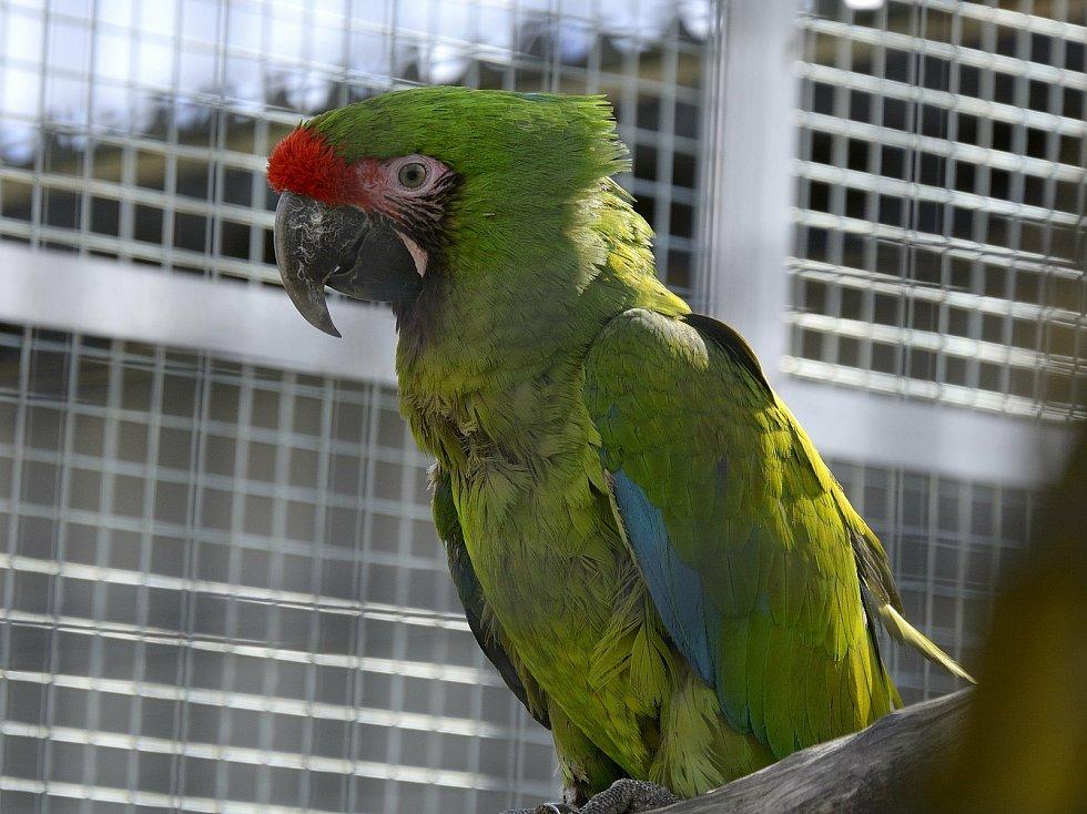 Papoušek na Statku u Merlina v Chyňavě.