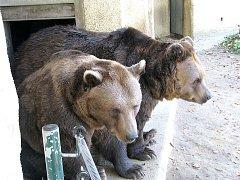 Medvědí večerníčkové hvězdy ze seriálu Méďové už vyhlížejí jaro.