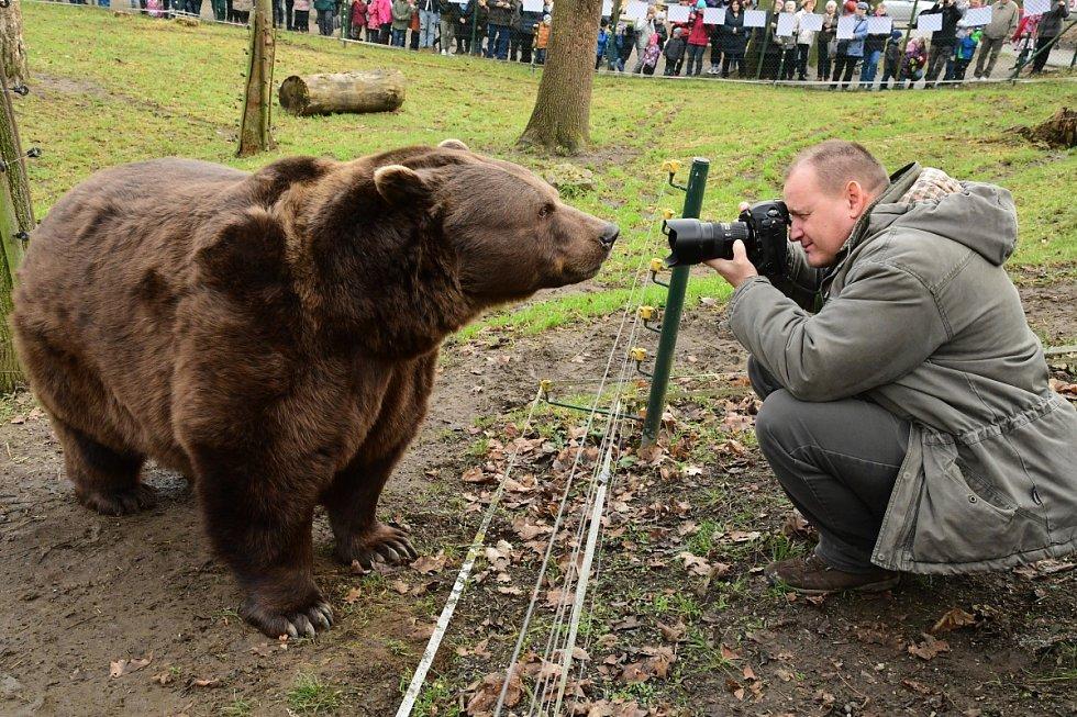 Z oslavy dvacátých narozenin medvědů Kuby a Matěje v areálu medvědária na Městské hoře v Berouně.