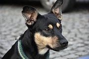 Sbírka psích potřeb a potravy odstartovala ve 14 hodin u kašny na Hosově náměstí a po pár desítkách minut bylo zaplněné skoro celé nákladní auto. Sbírka byla plánována do 16 hodin.
