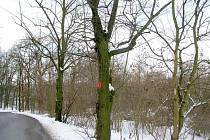 V Hořovicích jsou ke kácení i další stromy.