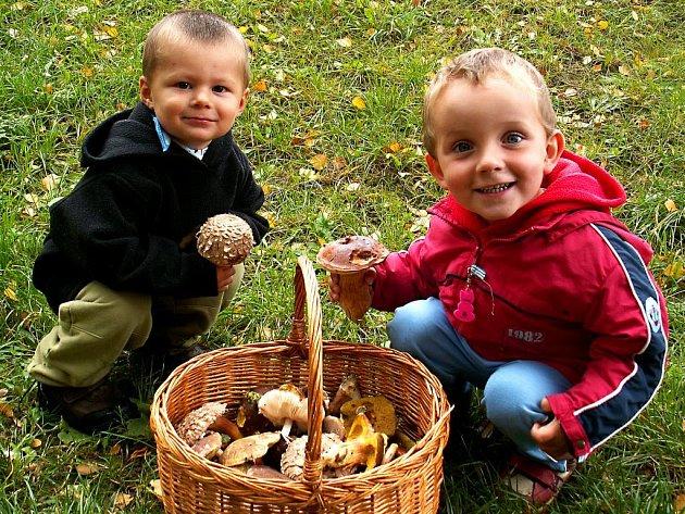 Lesy jsou opět plné hub. O tom se přesvědčili i dva malí houbaři, kteří se na své první životní úlovky nemohli vynadívat. Pak si na nich určitě pochutnali na talíři